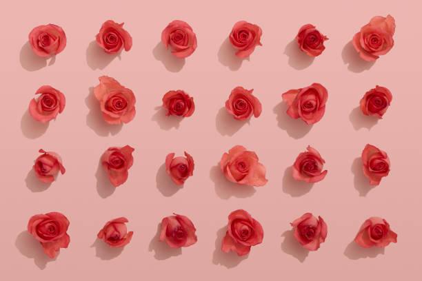 Red roses on pink background picture id910218858?b=1&k=6&m=910218858&s=612x612&w=0&h=9b5so0udbyuffzd3jut8f9esjxjbiw9aw1mxcegn1g0=