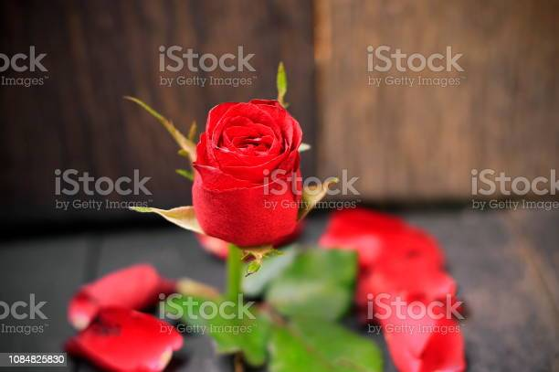 Red roses on the old wooden floor picture id1084825830?b=1&k=6&m=1084825830&s=612x612&h=wgmmorgqxrwmh10uzumk02zohdpi5eclkrdddc2q00u=