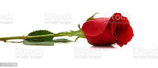 Red roses on white background picture id511217288?b=1&k=6&m=511217288&s=612x612&h=jlqu3ktoxtb5z cgfbgpfg93 iex fulom2nodpfnus=