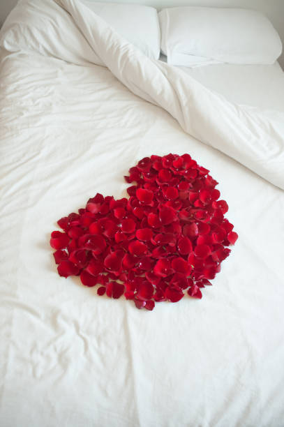 Red roses petals stock photo