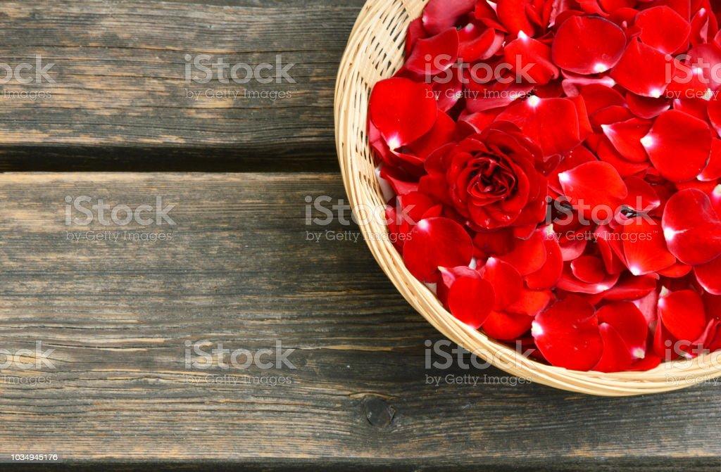 roses rouges - Photo