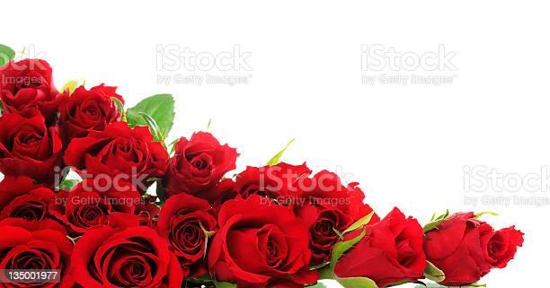 Red roses picture id135001977?b=1&k=6&m=135001977&s=612x612&h=4bcef9wkdwpfomavvfc7n5ibzivddq jf jhu5ayope=