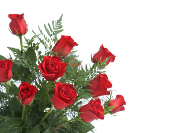 Red roses picture id172409288?b=1&k=6&m=172409288&s=612x612&w=0&h=emp4ech1sh3emykiau96ud2wst4vvezotar5van7l6q=
