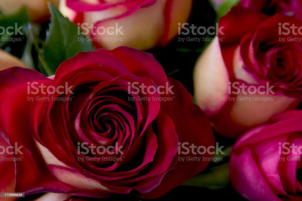 Red Roses #2 stock photo