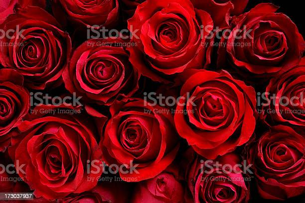 Red roses picture id173037937?b=1&k=6&m=173037937&s=612x612&h=mpubw7zcwds08gxehsl0ensfdmmmzzoojybgrxrkstm=