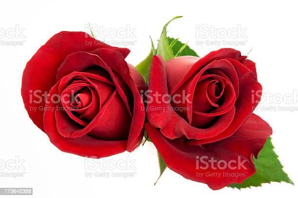 Red roses picture id173645388?b=1&k=6&m=173645388&s=612x612&h=gvafa1ohg4chvxzldaenvv9zu6bpe0prxeerscdcy3c=