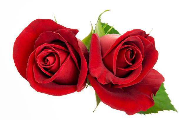 Red roses picture id173645388?b=1&k=6&m=173645388&s=612x612&w=0&h=buhsgfhs8bmd0f1kqa391og1olejeepfetzl60nvywm=