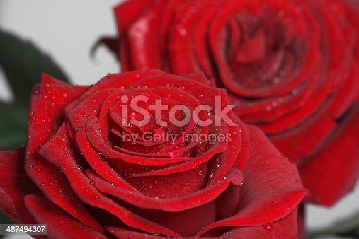155139080istockphoto Red roses 467494307
