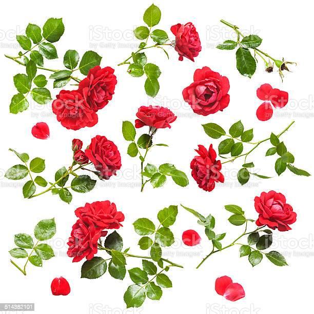 Red roses picture id514382101?b=1&k=6&m=514382101&s=612x612&h=hqggkmq8j 6jddotmwxaqqpjalsids1vltstkfsoh5k=