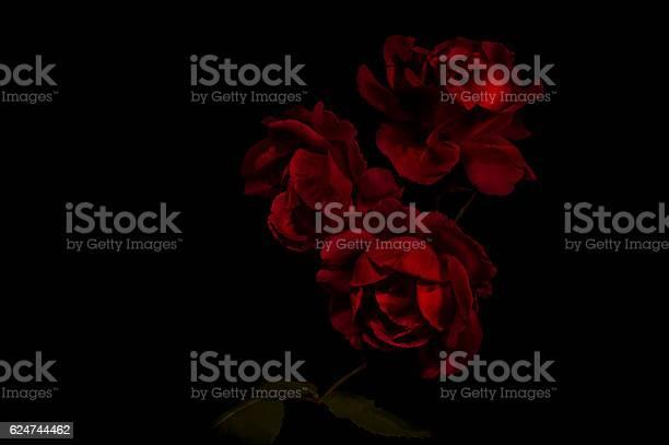 Red roses picture id624744462?b=1&k=6&m=624744462&s=612x612&h=7uwcodafzoqawl6dscahbj08ytisehu7q06 hjamff8=