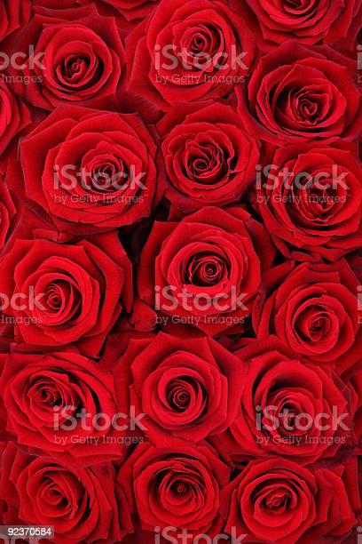 Red roses picture id92370584?b=1&k=6&m=92370584&s=612x612&h=fmxa 6b7k2ynjbapubxczjyr rojljs eenmf1pa5ps=
