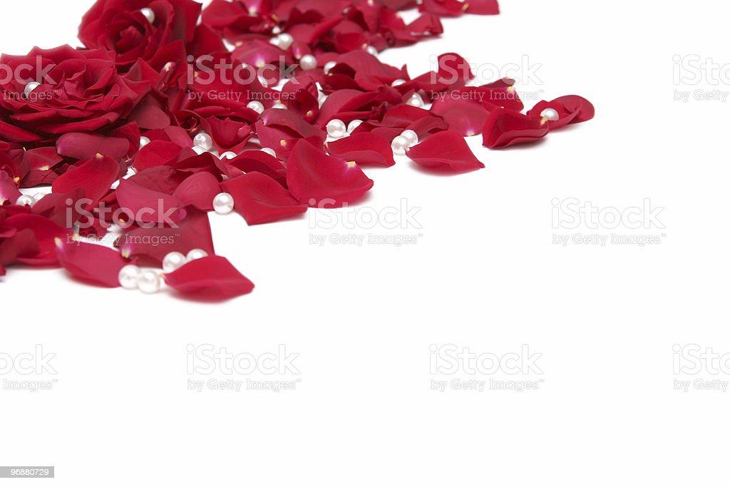 Rote Rosen Lizenzfreies stock-foto