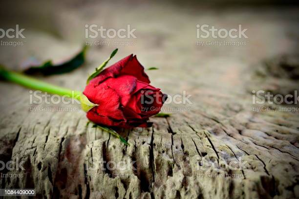 Red roses placed on old wood with backdrop blurred picture id1084409000?b=1&k=6&m=1084409000&s=612x612&h=ews5ok2tkwwby8c6uhyhkog73kev9f3znqcxzkf7wm4=