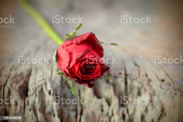 Red roses placed on old wood with backdrop blurred picture id1084409006?b=1&k=6&m=1084409006&s=612x612&h=segzz7fsnuh5gi6mrc1io3gpt0klvbbqgogocf1m1km=