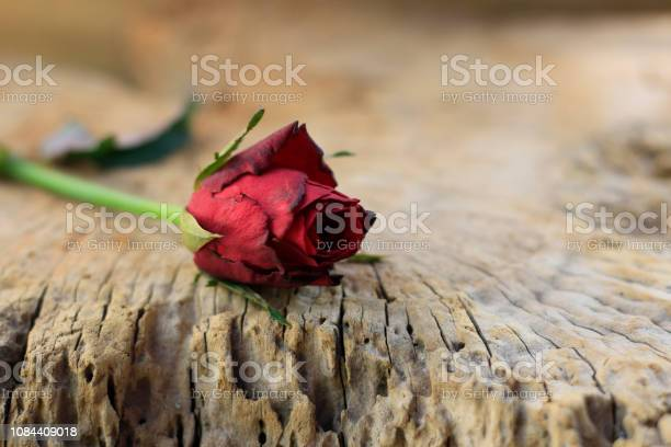 Red roses placed on old wood with backdrop blurred picture id1084409018?b=1&k=6&m=1084409018&s=612x612&h=cfgnf21yteusvoswpbeq9c4isp p0oczanybbpqsktq=