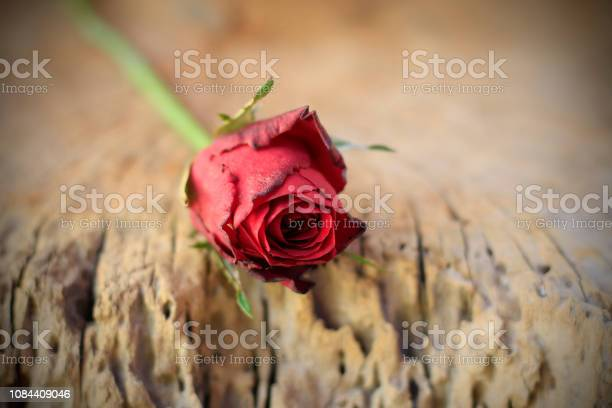 Red roses placed on old wood with backdrop blurred picture id1084409046?b=1&k=6&m=1084409046&s=612x612&h=jia8zef6jook5pfxh3f34efvqtd6bals7mcv1lx1sc8=
