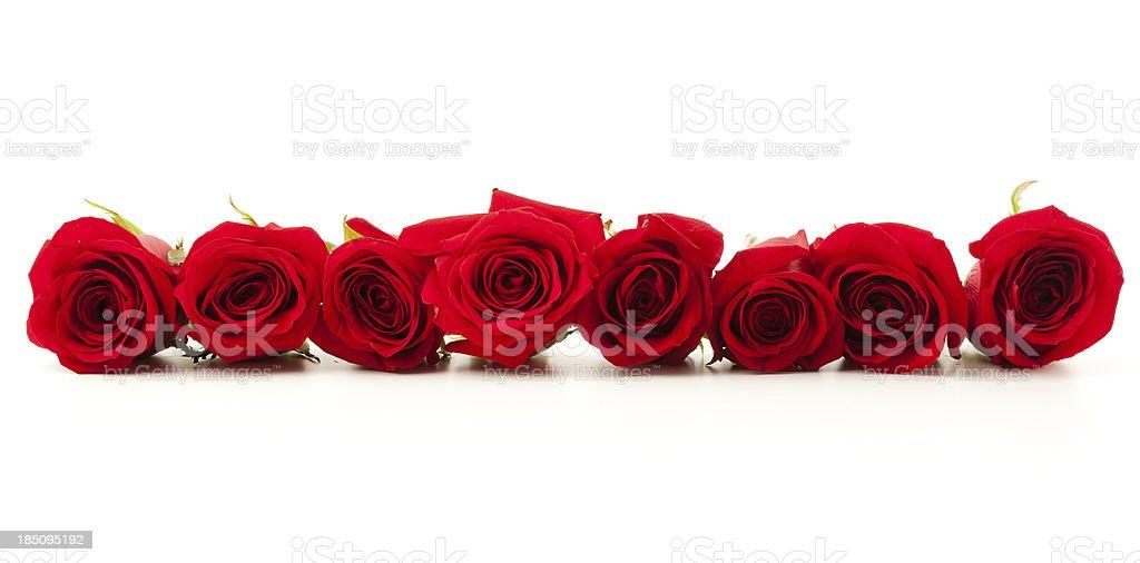 Czerwone Róż Wiersz Zdjęcia Stockowe I Więcej Obrazów Bez