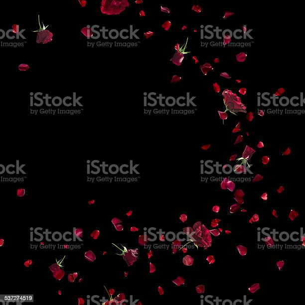 Red roses sweep on black picture id537274519?b=1&k=6&m=537274519&s=612x612&h=ybn7fgtai5k38fyxikpkjewu jncpuk 317p2juhfu4=