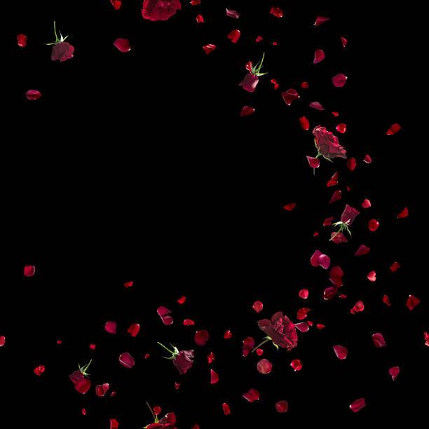 Red roses sweep on black picture id537274519?b=1&k=6&m=537274519&s=612x612&w=0&h=ve3c8hue0a dhsgy4uu o6 v3txt3uyd1utvqdveity=