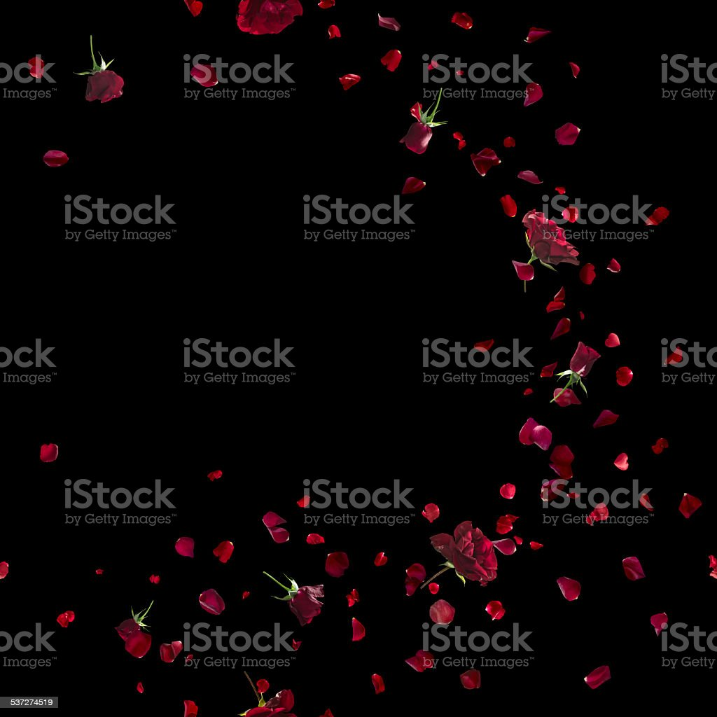 Red Roses Sweep on Black stock photo