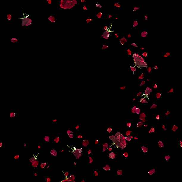 red roses sweep on black - rose petals stock pictures, royalty-free photos & images