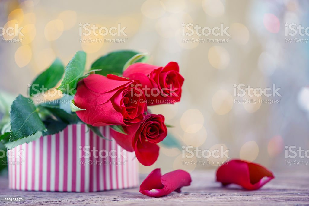 Red roses with petals and present box for Valentine stock photo