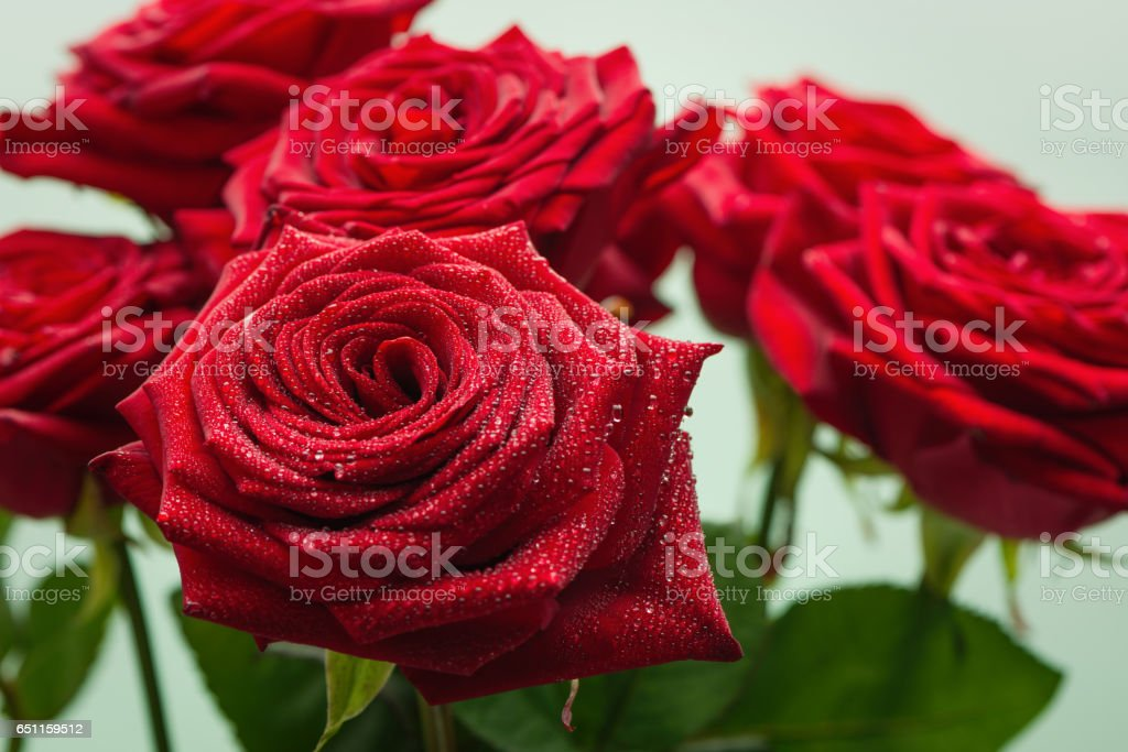 Red roses with water droplets стоковое фото