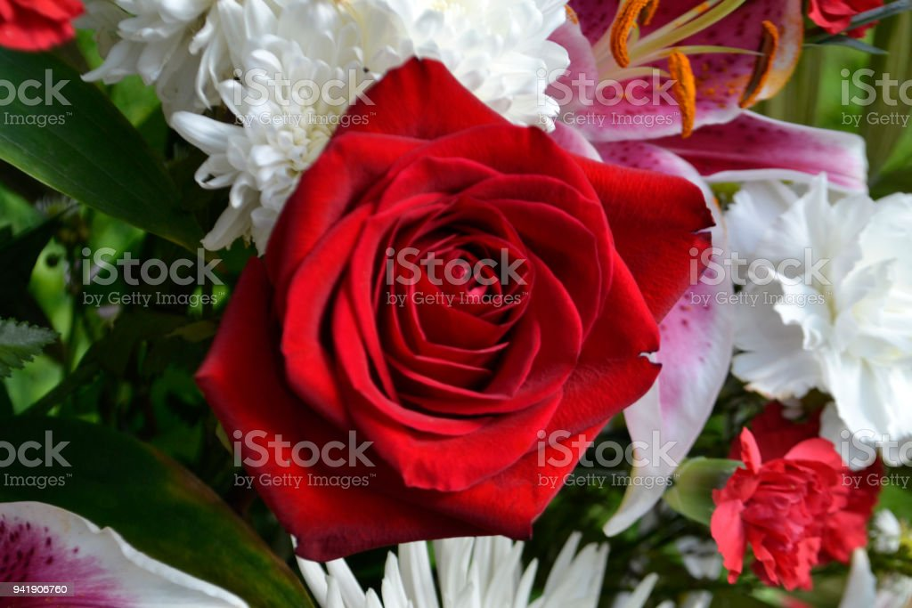 Red Roses within an assortment of flowers (Flowerbed) stock photo
