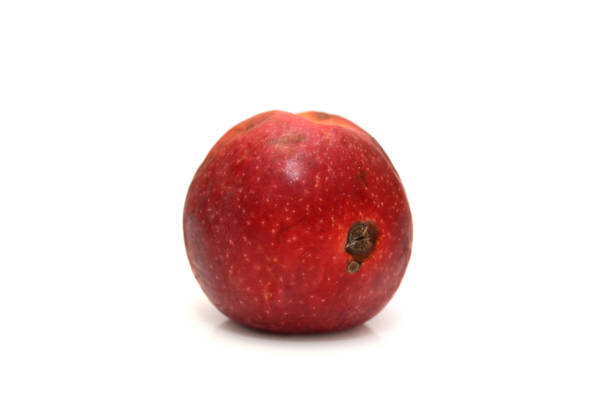 Red rotten apple, natural color and texture. stock photo