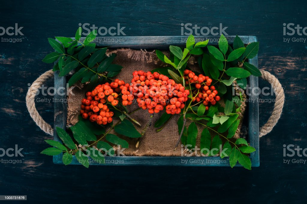 Red rowanberry in a wooden box. On a black wooden background. Top...