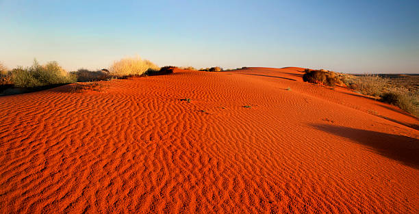 Red sand in Simpson Desert, Australian outback A sand dune at sunrise in the Simpson Desert, outback Australia. outback stock pictures, royalty-free photos & images