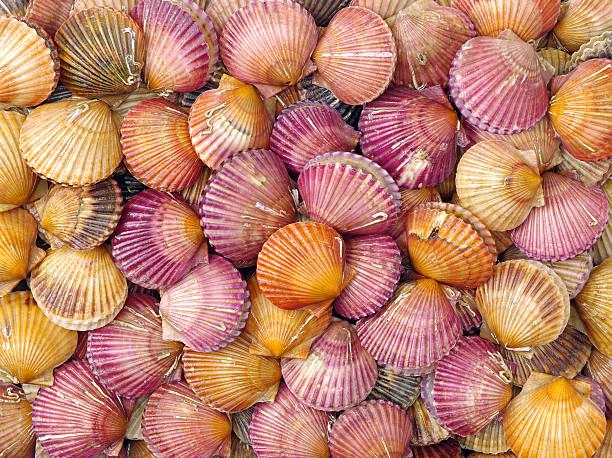 red scallop shells foto