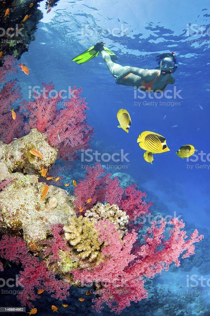 Red Sea beuties stock photo