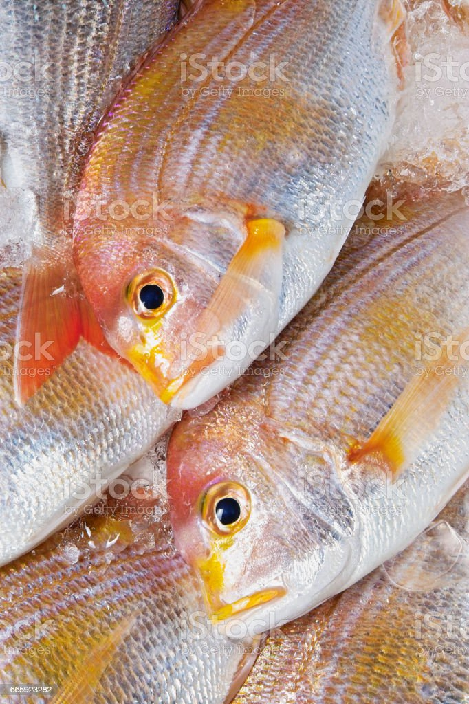 Red sea bream foto stock royalty-free