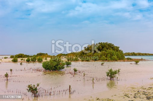 Red Sea coast and mangroves in the Ras Mohammed National Park. Famous travel destionation in desert. Sharm el Sheik, Sinai Peninsula, Egypt.