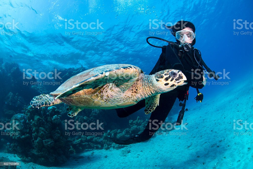 Red Sea cutie stock photo