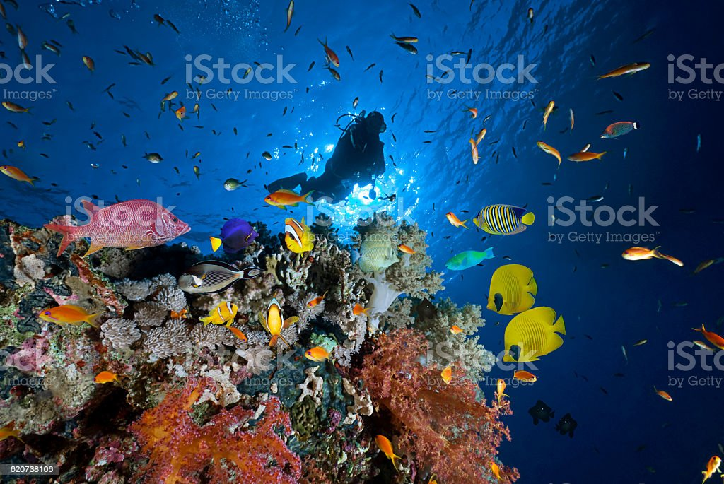 Red Sea Diver stock photo