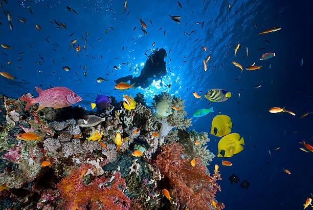 Plongeur de la Mer Rouge - Photo