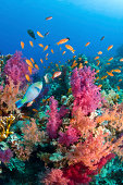 Typical coral reef in Red Sea