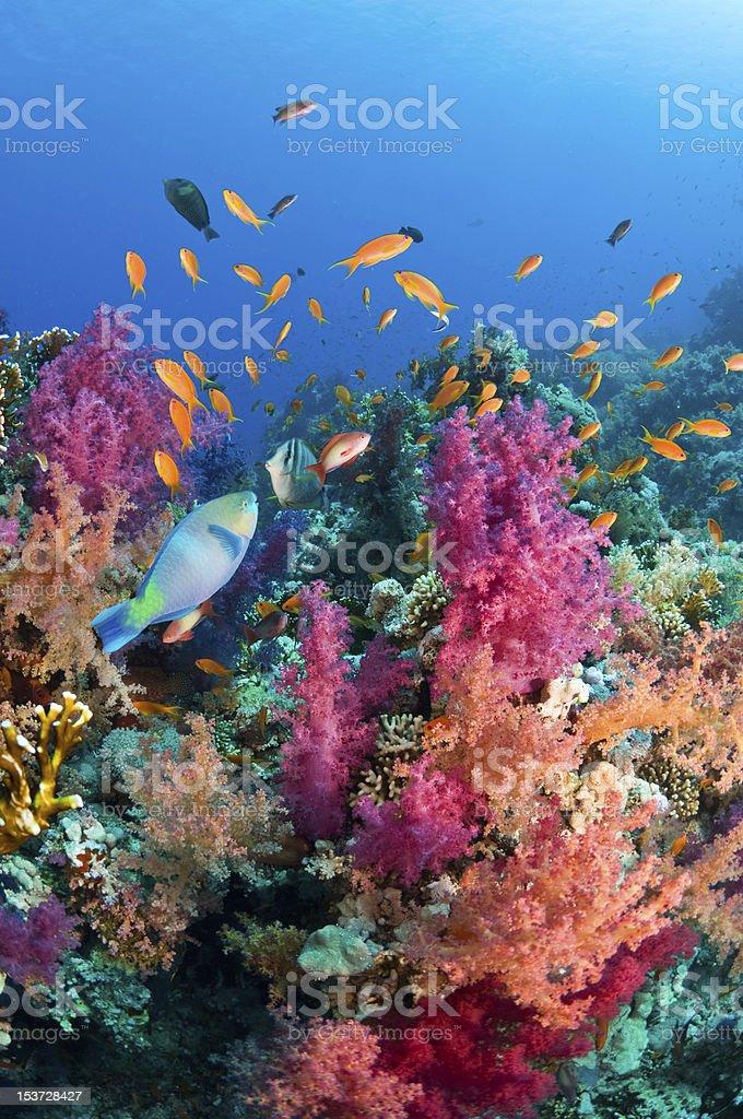 Red Sea diversity stock photo