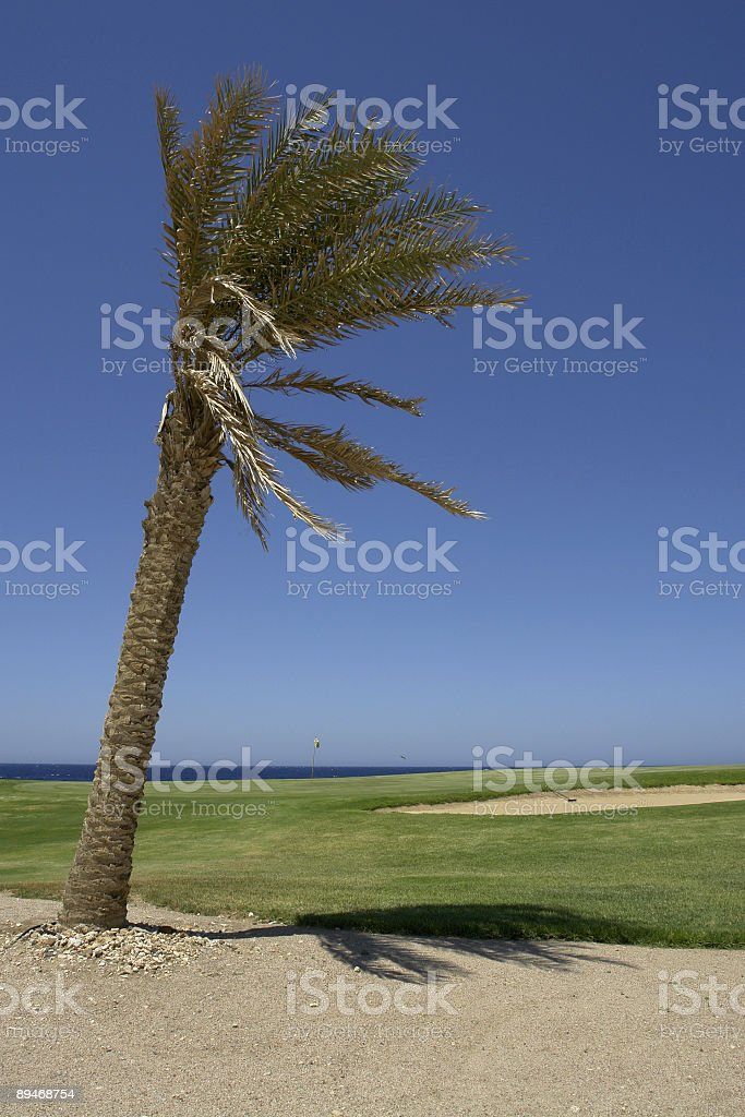 Red Sea Golf Course Soma Bay royalty-free stock photo
