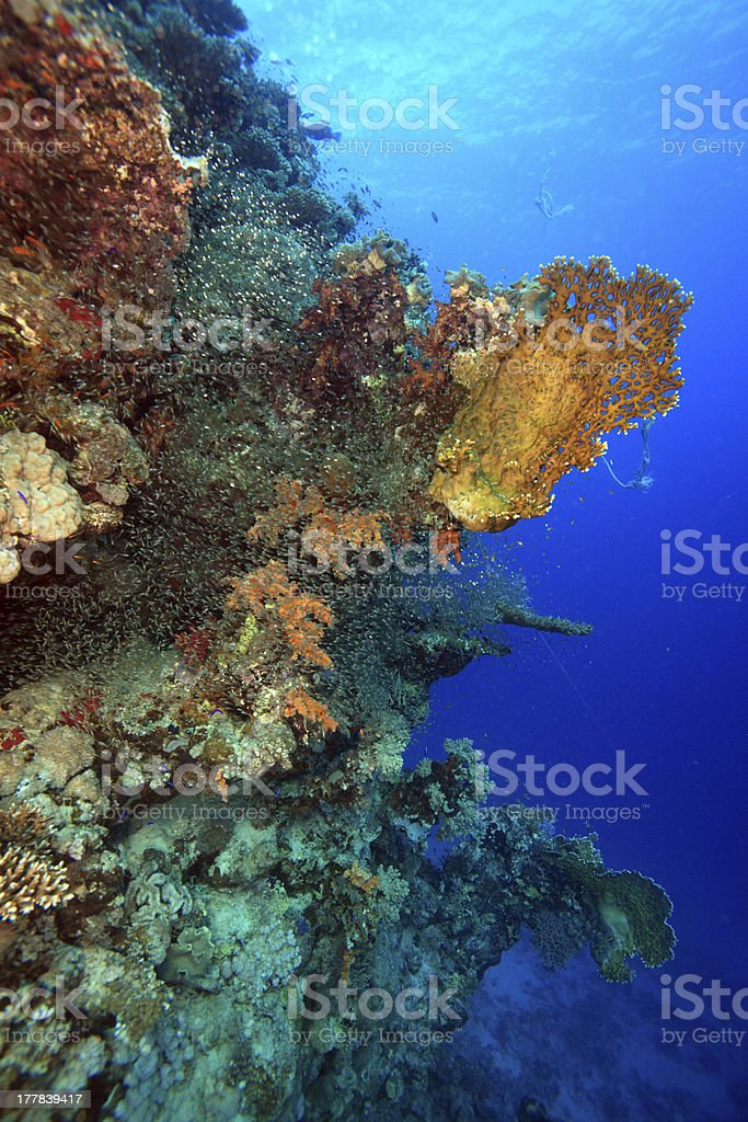 Red Sea royalty-free stock photo