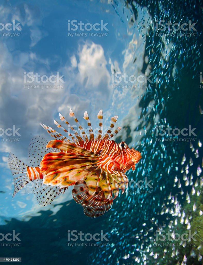Red Sea stock photo