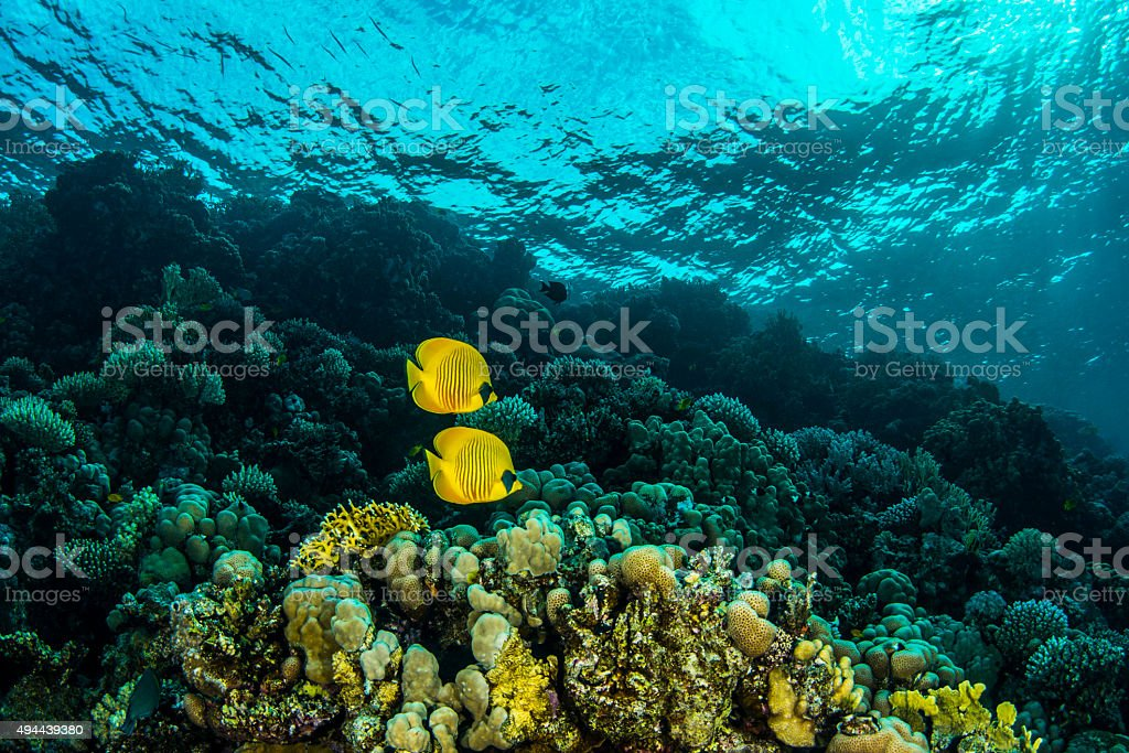 Red Sea stock photo