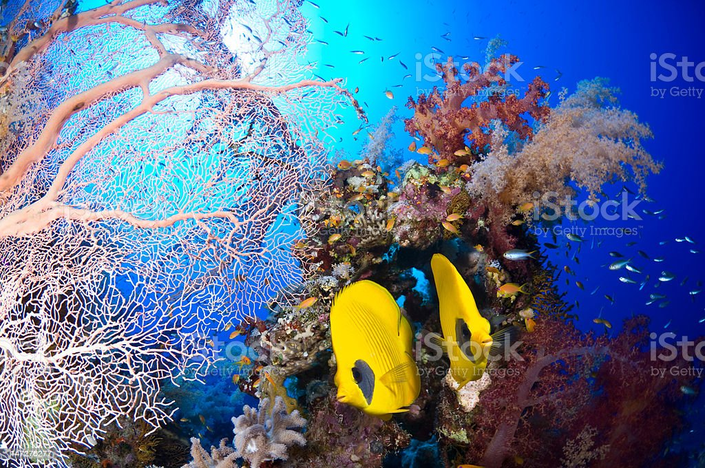 Red sea spectrum royalty-free stock photo