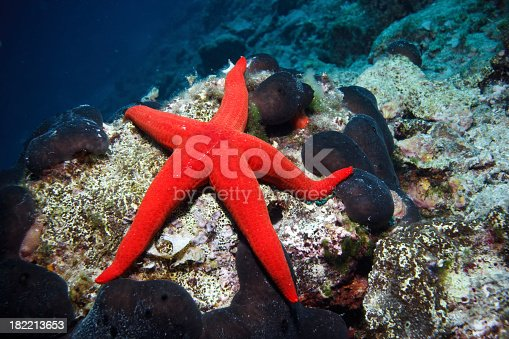 istock A red sea star on the ocean floor 182213653