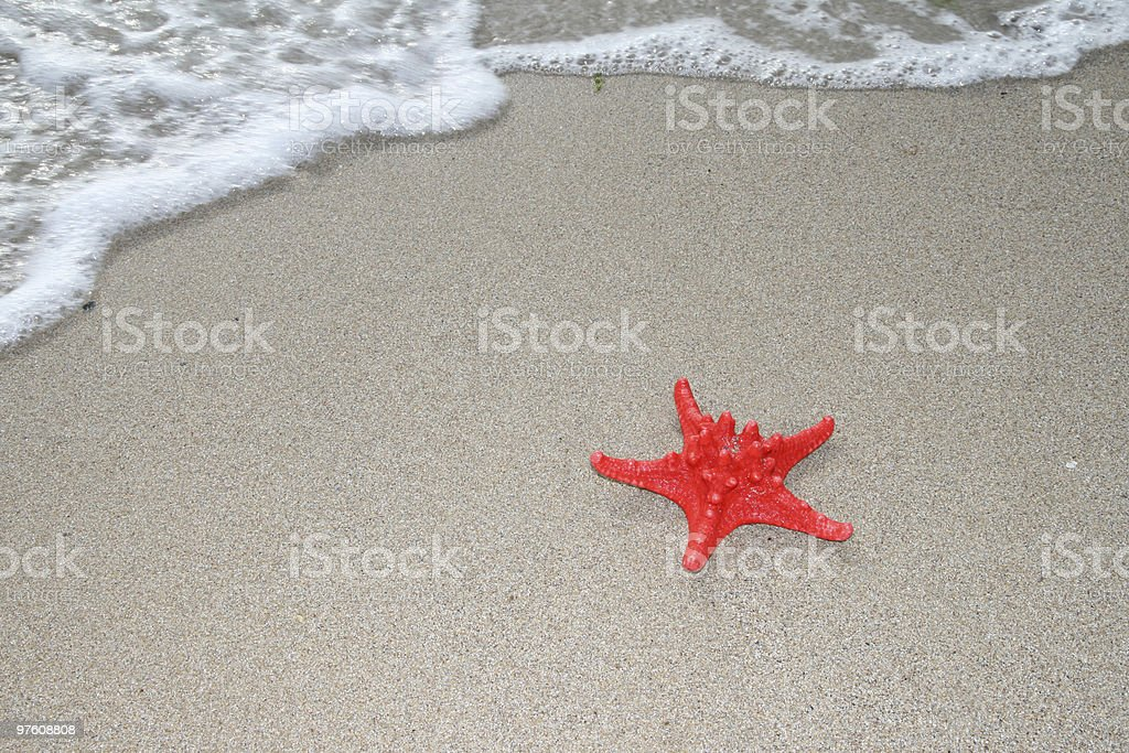Red sea star series royalty-free stock photo