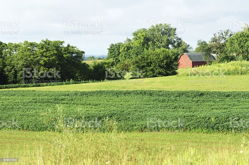 Red Shed on the Farm royalty-free stock photo