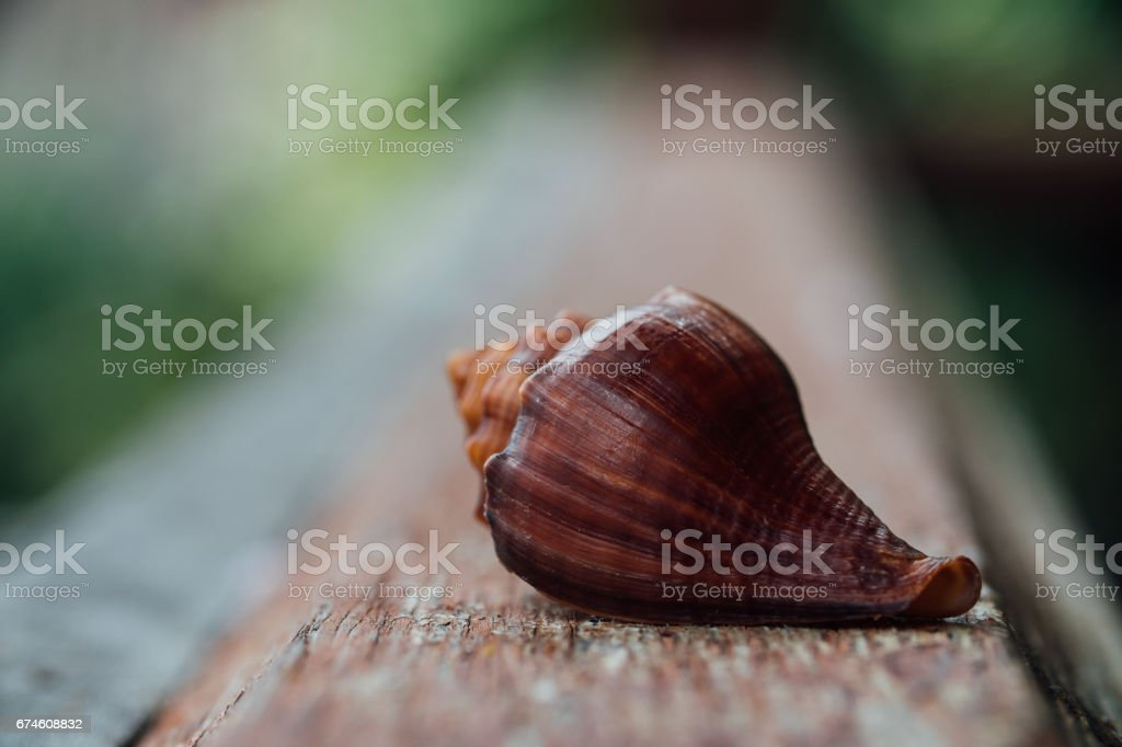 Red Shell in an old fence. Macro stock photo