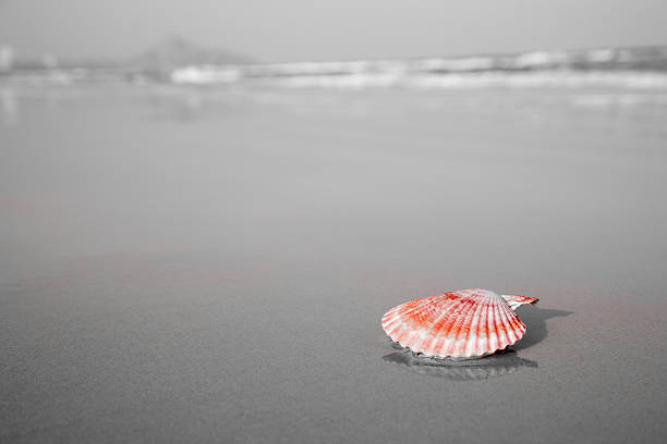 Red shell laying on the beach foto